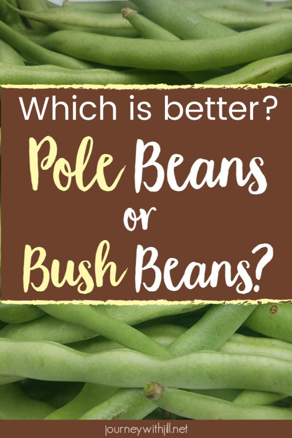 Pole Beans vs Bush Beans