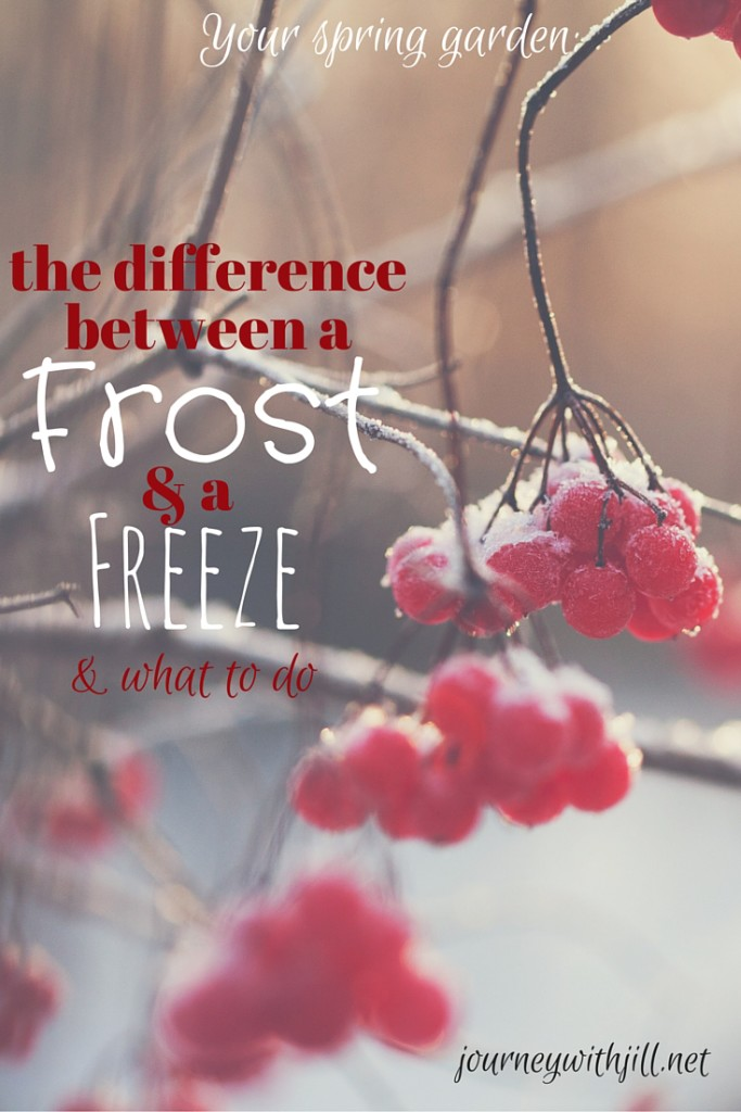 Difference between a frost and a freeze in a spring garden | Journey with Jill