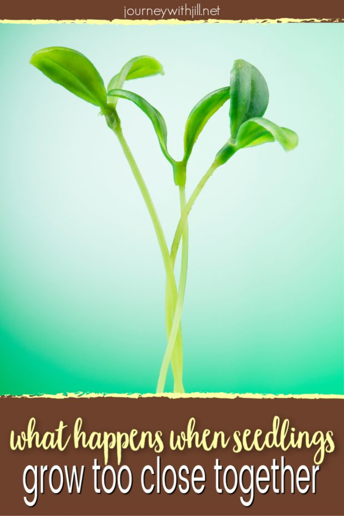why to thin seedlings