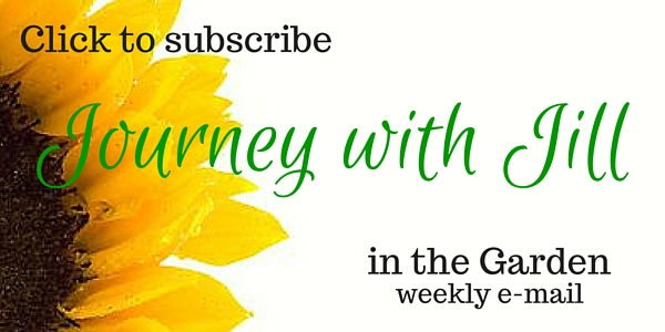 Journey with Jill in the Garden subscribe