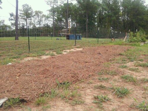 Pine Needles as Mulch in Your Garden