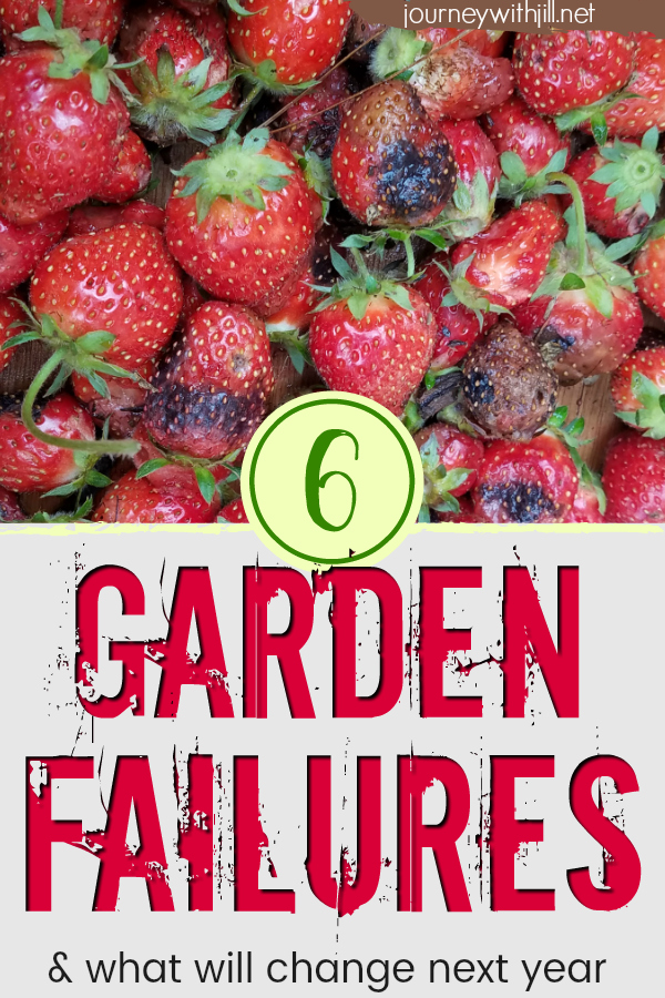 6 Garden Failures and What Will Change Next Year