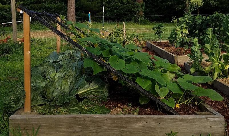 Small cucumber trellis