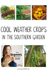 Cool Weather Crops in the Southern Garden