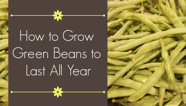 Grow Green Beans to Last All Year