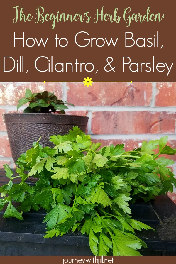 The Beginner's Herb Garden: Basil, Dill, Cilantro, & Parsley