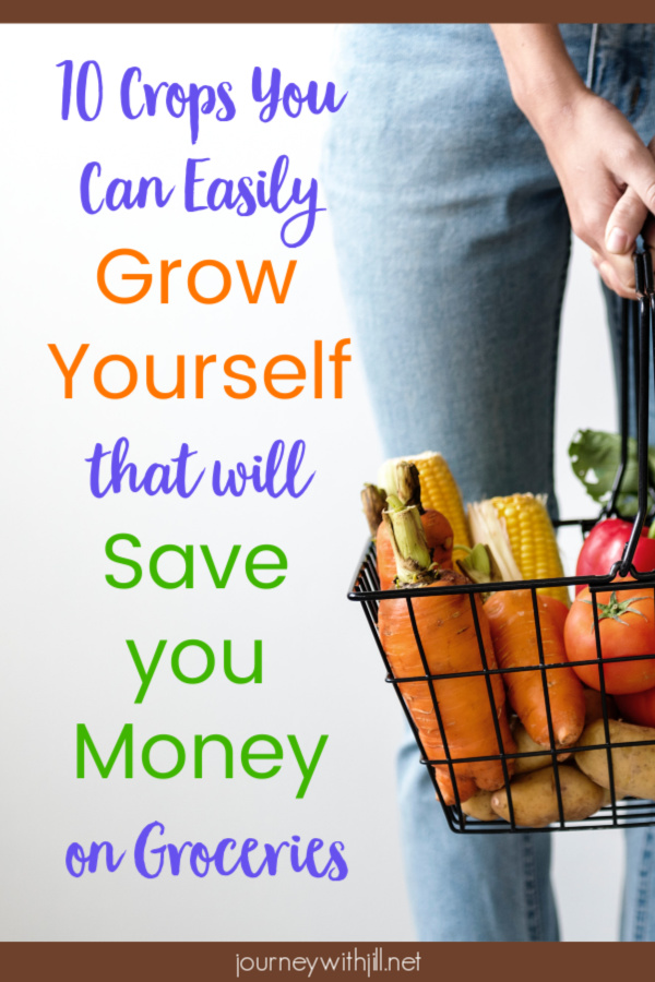 10 Crops You Can Easily Grow Yourself that Will Save You Money on Groceries
