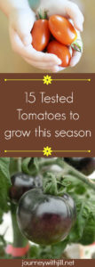 15 Tested Tomatoes to Grow This Season