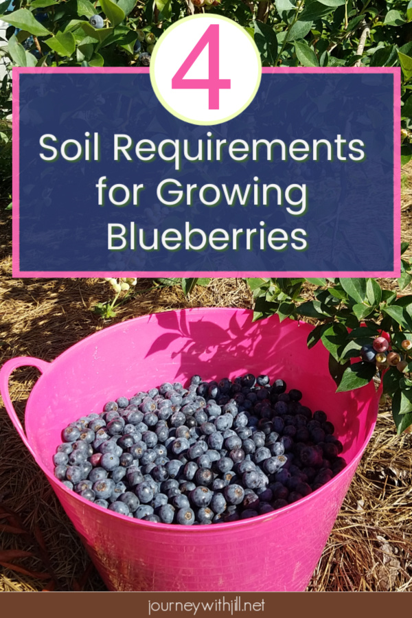 4 Soil Requirements for Growing Blueberries