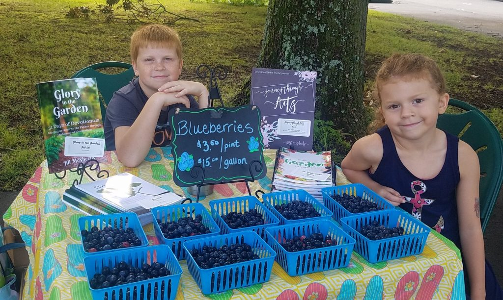 selling blueberries at farmers market