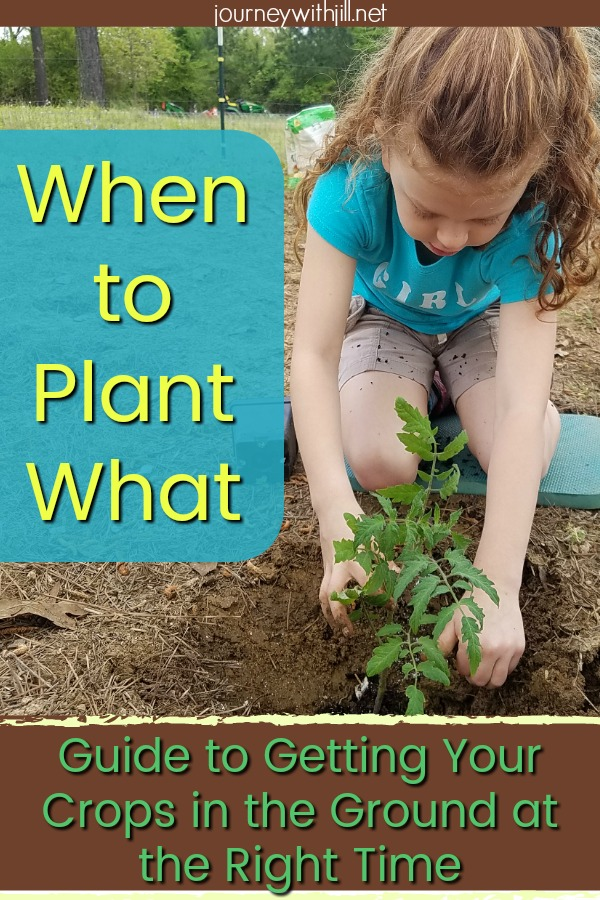 When to Plant What: Guide for Getting Your Plants in the Ground at the Right Time