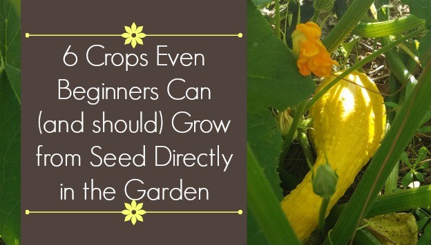 6 Crops Beginners Can Grow from Seed Directly in the Garden (No Indoor Seed-Starting Required)