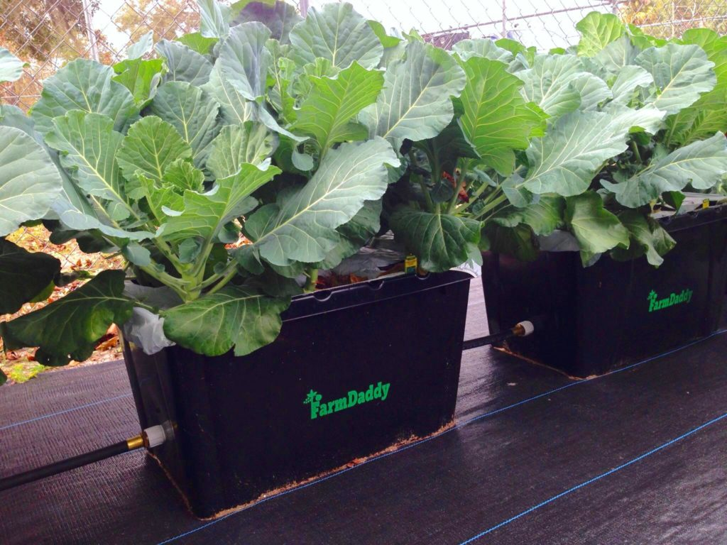 farm daddy self-watering container