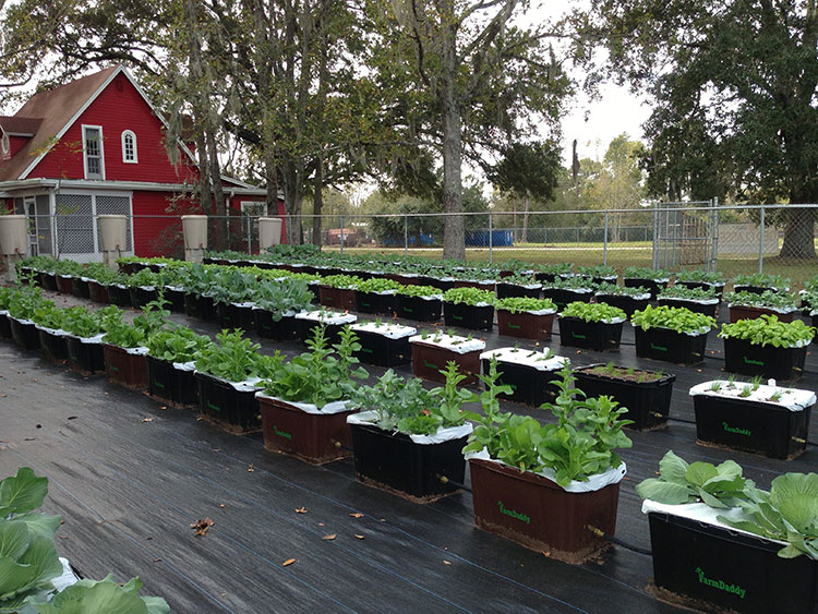 FarmDaddy Container Watering System