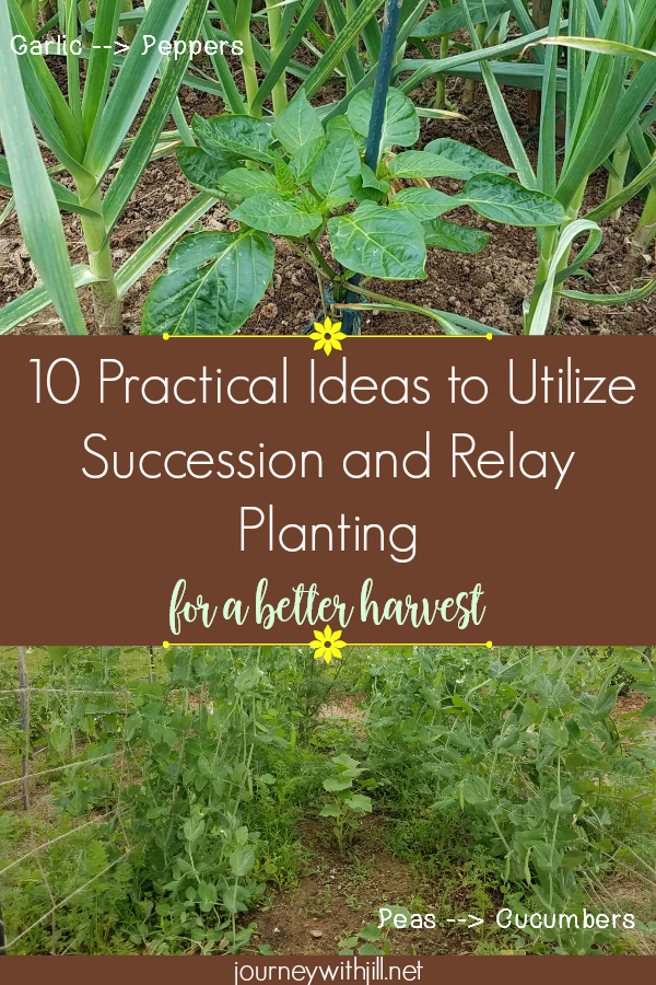 10 Succession and Relay Planting Ideas for the Garden