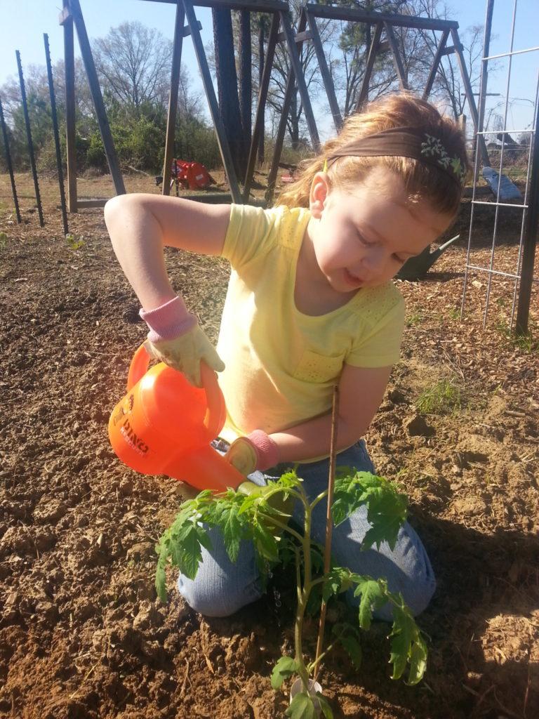 child transplanting a tomato plant