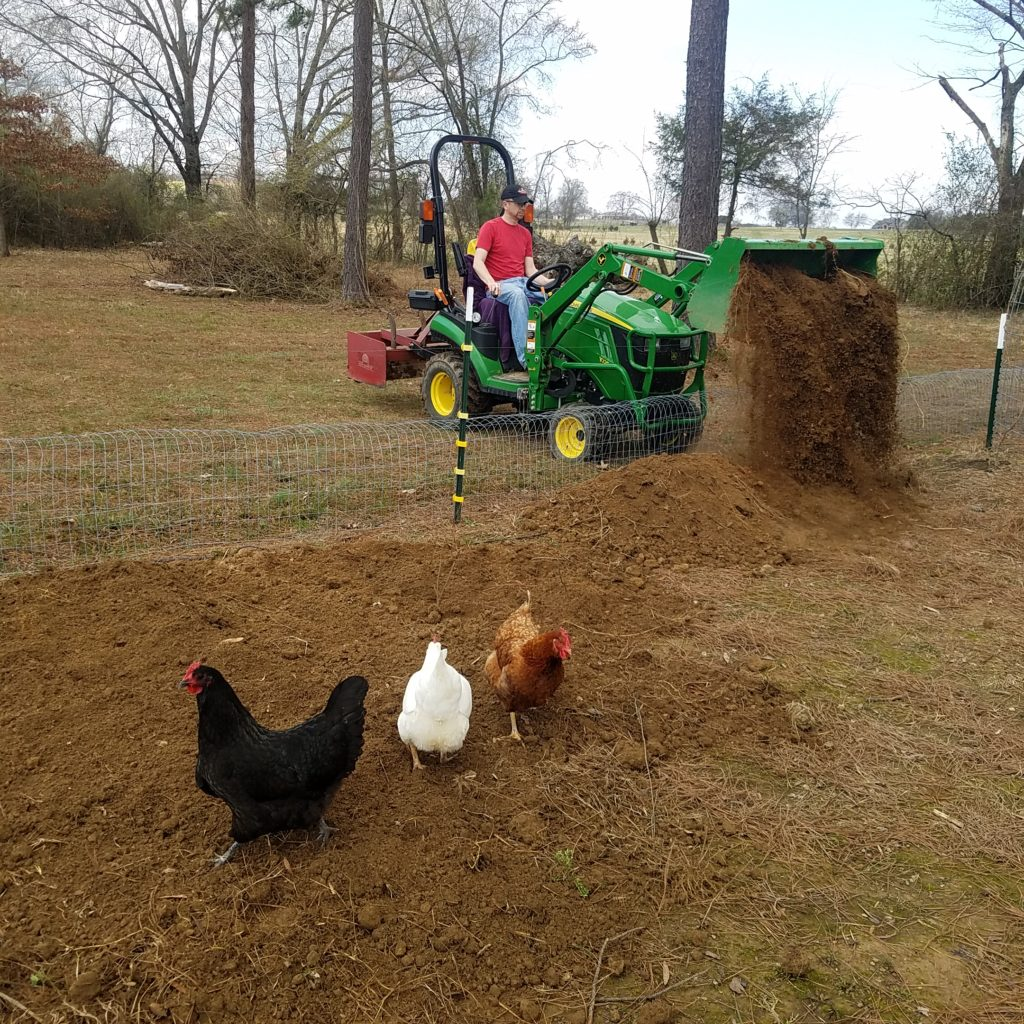 chickens scratch in new soil