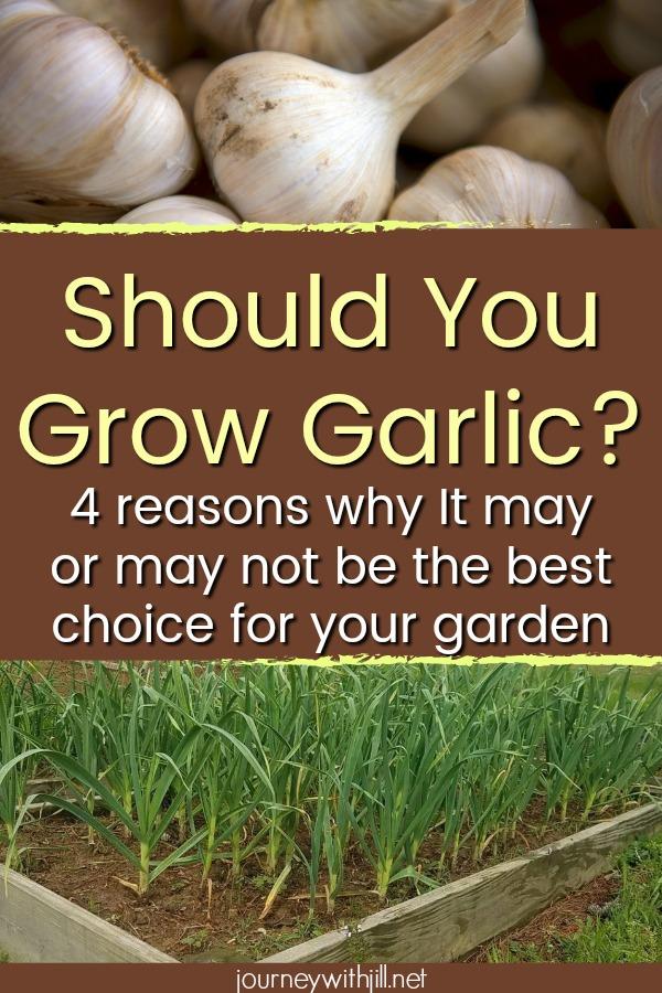 Should You Grow Garlic?