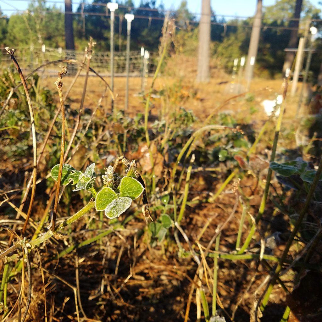 leftover plants in garden