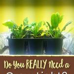 Do you need a grow light to start seeds indoors?