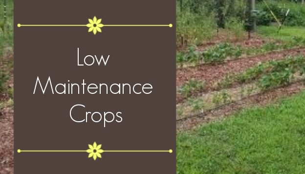 6 Low Maintenance Crops for Busy Gardeners