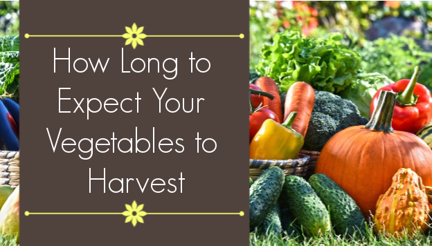 Continuous Harvest vs. Quick Maturing Vegetables
