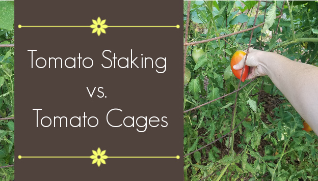 Is it better to stake or cage tomatoes?