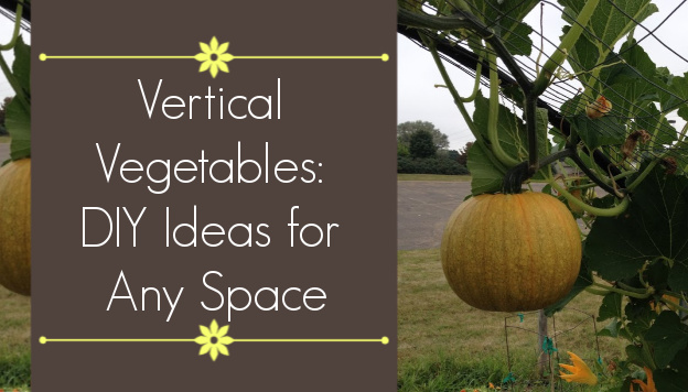 Vertical Vegetables – Unique DIY Ideas for Any Space