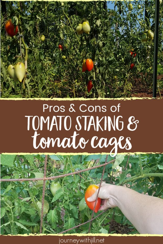 pros and cons of tomato staking and tomato cages