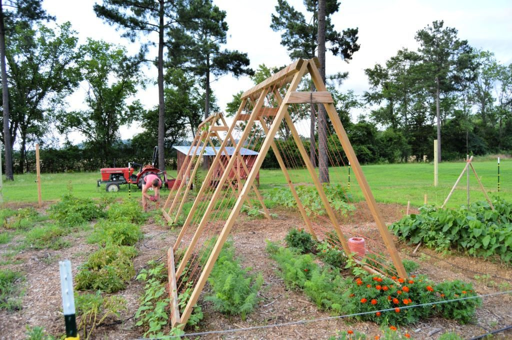 a-frame-trellis-companion-planting