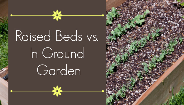 Raised beds vs in ground beds