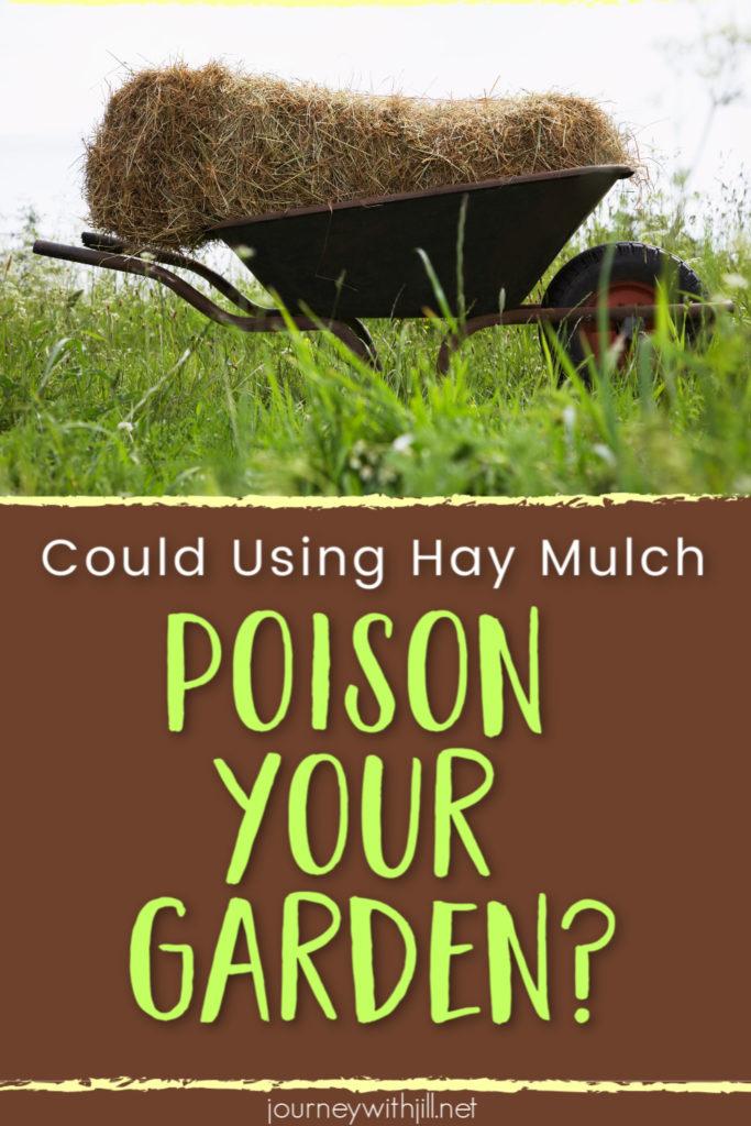 Hay Mulch Poisoning a Garden