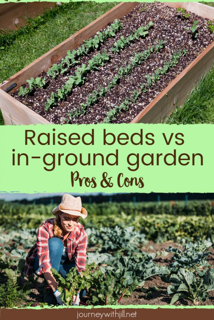 raised garden bed vs in ground bed