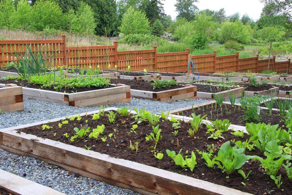 Benefits of Raised Garden Bed