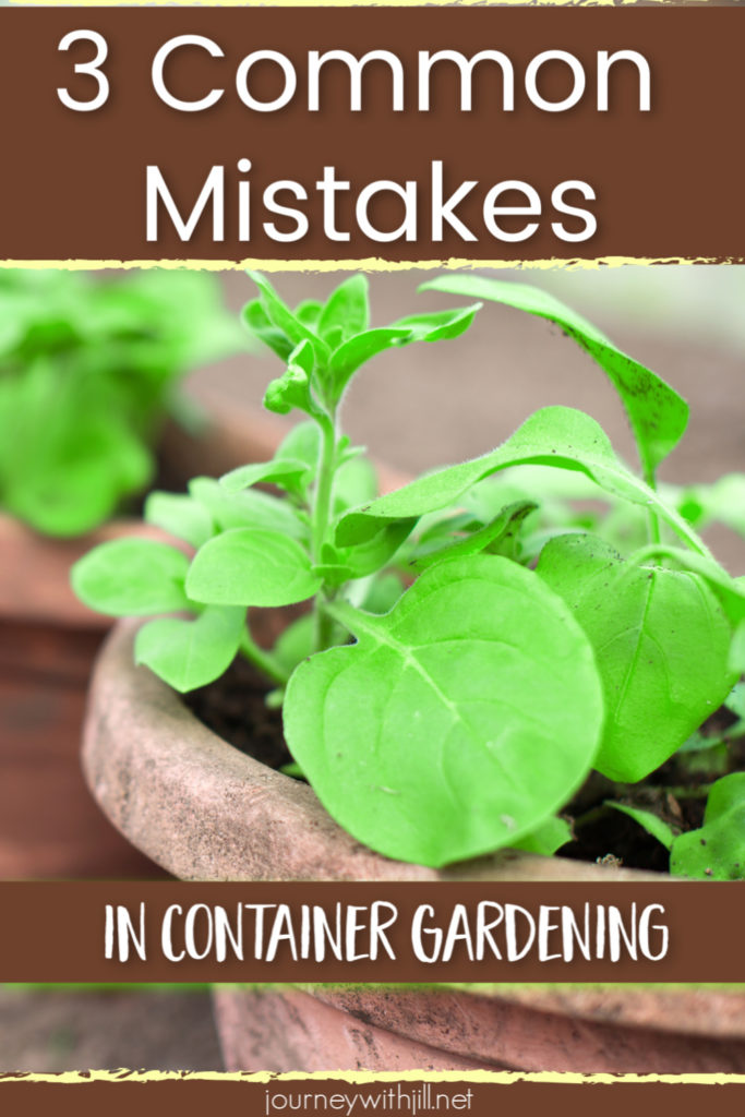 3 common mistakes in container gardening