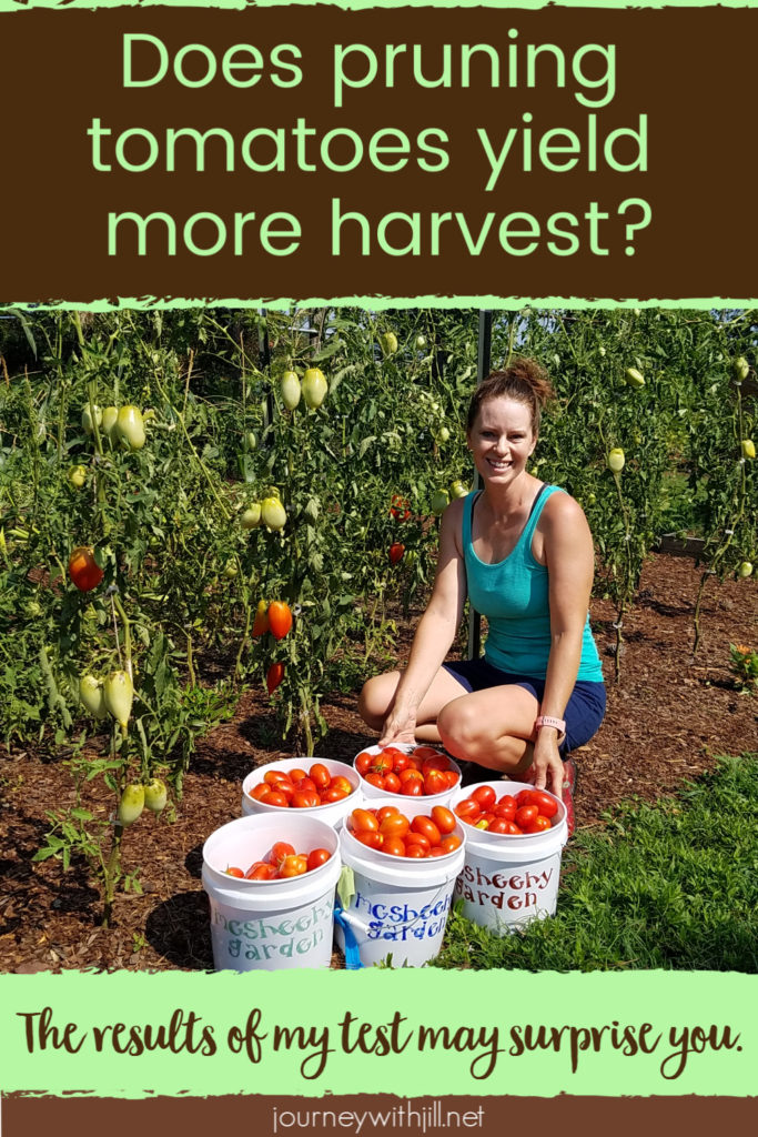 does pruning tomatoes increase harvest