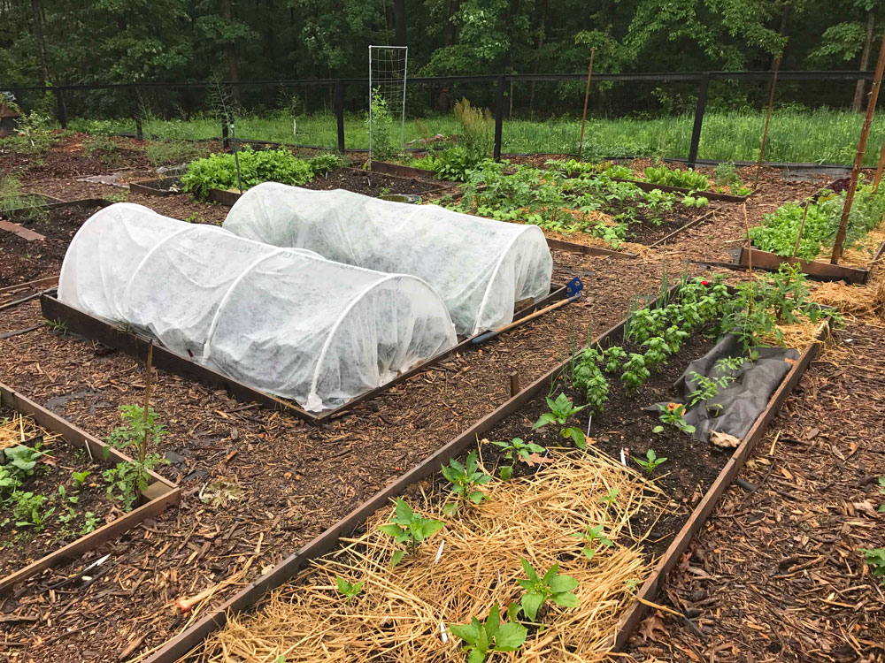Floating Row Covers on Low Tunnels for a Year-Round Harvest