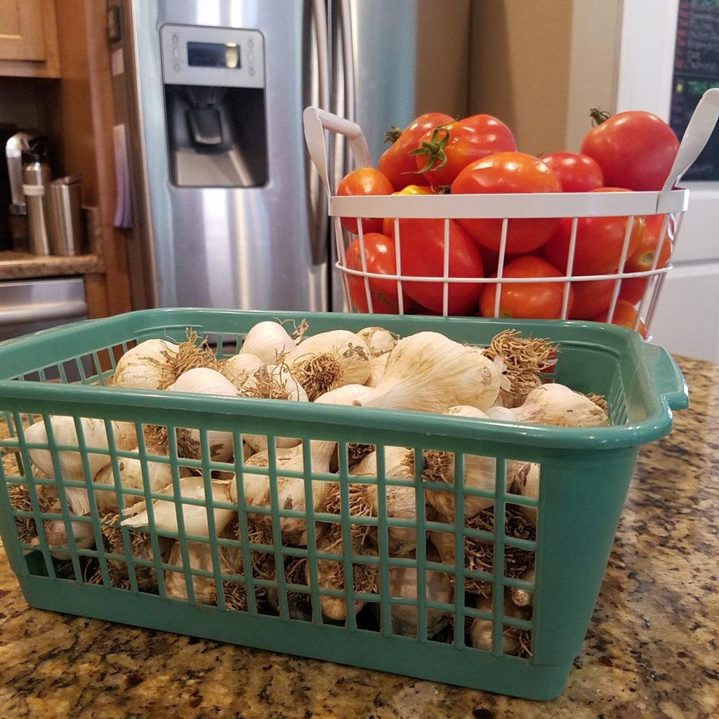 storing garlic in basket