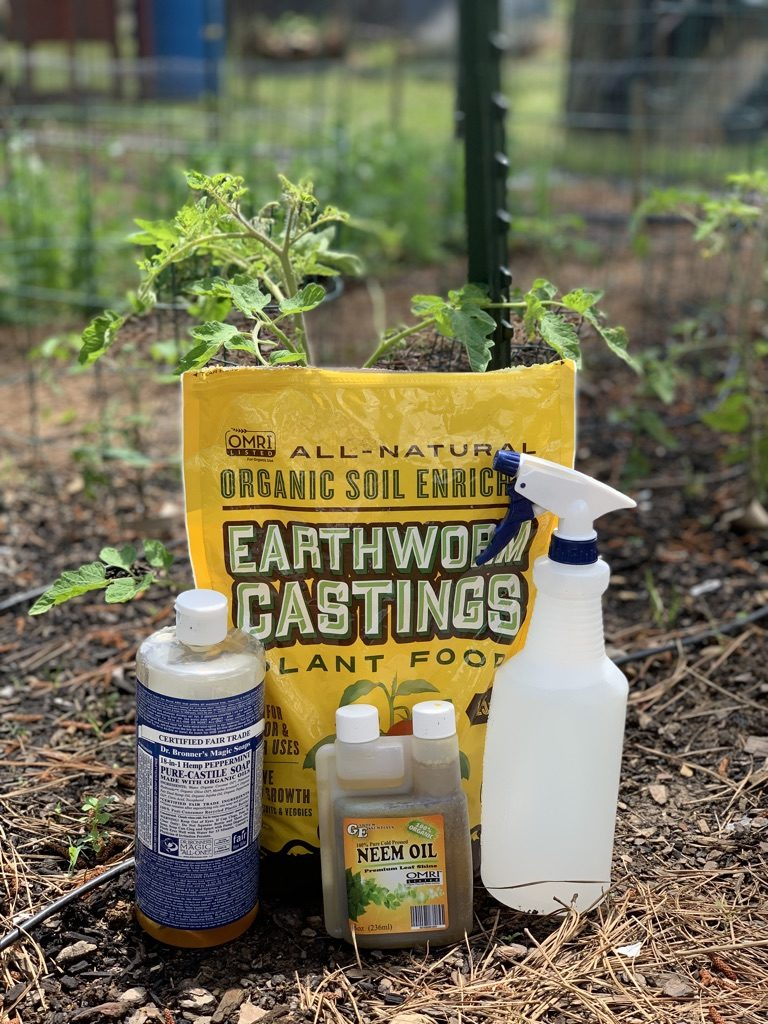 organic aphid control methods
