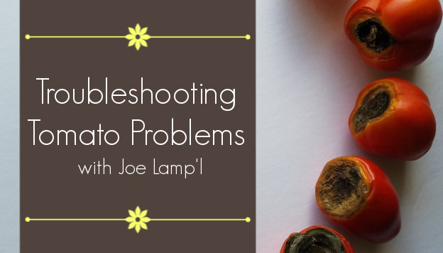 Troubleshooting Tomato Plant Problems with Joe Lamp'l