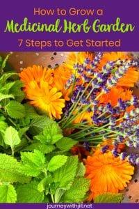 how to grow a medicinal herb garden