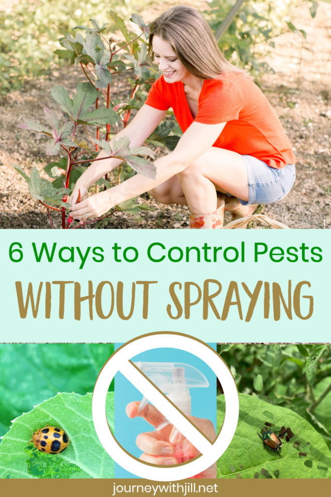 Pest Control without Pesticides for a Healthy Organic Garden