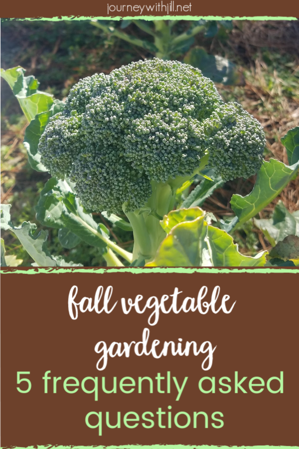 Common Questions in the Fall Vegetable Garden