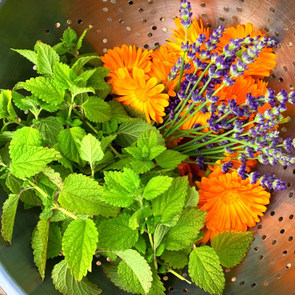 mint lavender and calendula