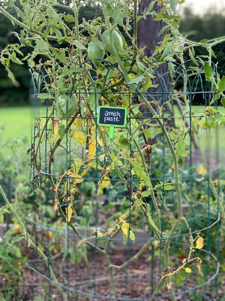 remove diseased plants for a fall garden task