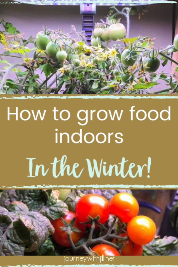 How to Grow Food Indoors in the Winter