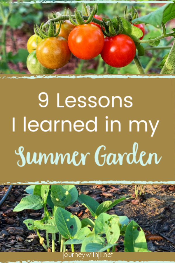 9 Lessons I learned in my summer garden