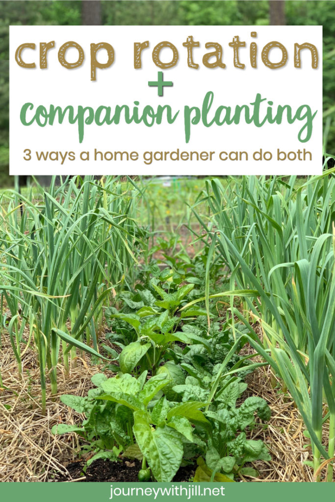 Crop Rotation for Home Vegetable Gardeners