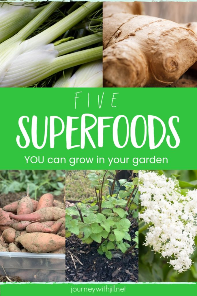 5 Superfoods to Plant in Your Garden