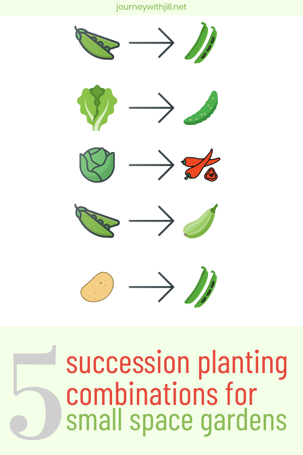 succession planting combinations small space gardens